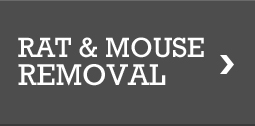 Rat & Mouse Removal, Pest Removal San Antonio and Austin TX